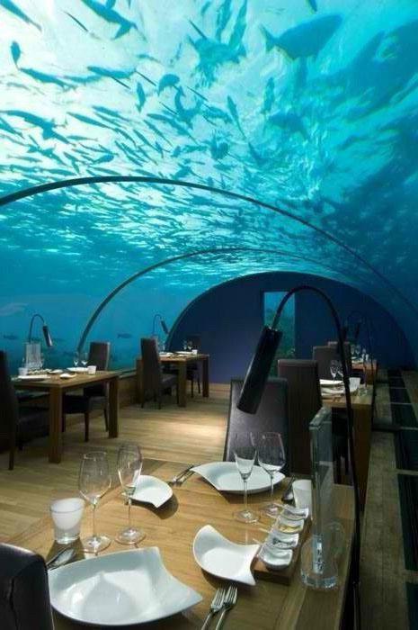 壁纸 海底 海底世界 海洋馆 水族馆 桌面 465_700 竖版 竖屏 手机
