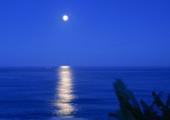 月色,淡淡如水_唯